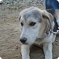 Adopt A Pet :: Cora - Clinton, ME
