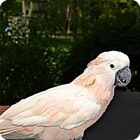 Adopt A Pet :: ZAZOO - Mantua, OH