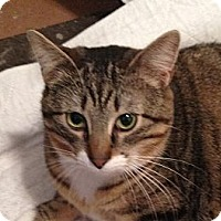 Adopt A Pet :: Tansey - western, MN