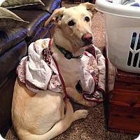 Adopt A Pet :: Emma - Alliance, NE