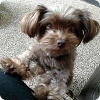 Adopt A Pet :: Meeka - Gig Harbor, WA