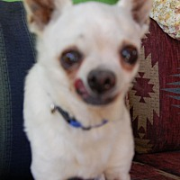 Adopt A Pet :: Happy - Creston, CA
