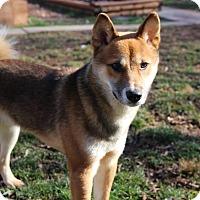Adopt A Pet :: Kasshoku - Manassas, VA