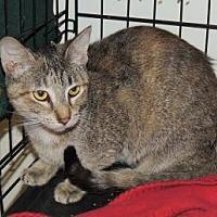 Adopt A Pet :: Rafee - Westville, IN