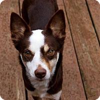 Adopt A Pet :: Spirt in CT - East Hartford, CT