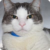 Adopt A Pet :: TWAIN - Clayton, NJ