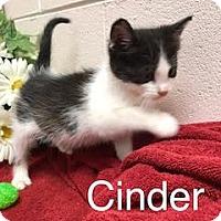 Adopt A Pet :: Cinder - Salem, WV