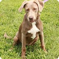 Adopt A Pet :: Gracie - Salem, NH