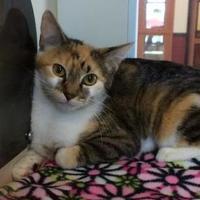 Adopt A Pet :: Luana - Rochester, MN