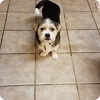 Adopt A Pet :: Shilo - Ocean Springs, MS