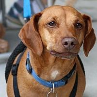 Adopt A Pet :: Yolo - Cary, NC
