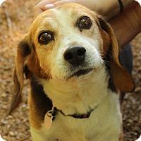 Adopt A Pet :: Dale - O Fallon, IL