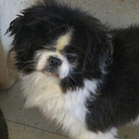 Adopt A Pet :: Kane - Oakdale, TN