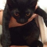 Adopt A Pet :: Sabrina - Tuckerton, NJ