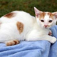 Adopt A Pet :: DON JUAN - Andover, CT