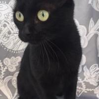 Adopt A Pet :: Nubbins - Logan, IA