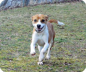 Terrier (Unknown Type, Small) Mix Dog for adoption in Sylva, North Carolina - Laurie