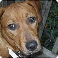 Adopt A Pet :: Mindi - Newport, VT