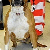Adopt A Pet :: Tulip - Washington Court House, OH