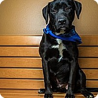 Adopt A Pet :: Chester - Courtesy Posting - New Canaan, CT