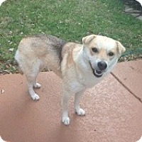 Adopt A Pet :: Molly - justin, TX