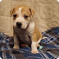 Adopt A Pet :: Dorado - Hilliard, OH