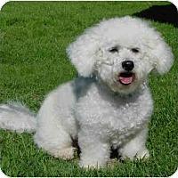Adopt A Pet :: Henry - La Costa, CA