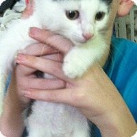 Adopt A Pet :: Nicki - Riverhead, NY