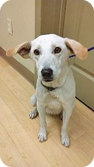 Shepherd (Unknown Type) Mix Dog for adoption in Spokane, Washington - Dory
