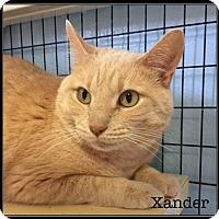 Domestic Shorthair Cat for adoption in Jasper, Indiana - Xander-SPONSORED ADOPTION FEE