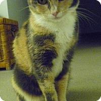 Adopt A Pet :: Adelaide - Hamburg, NY