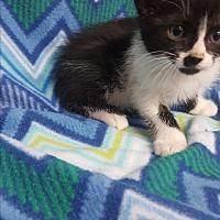 Adopt A Pet :: Piston - yuba city, CA