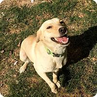 Adopt A Pet :: Marigold - Sacramento, CA