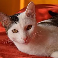 Adopt A Pet :: Nikey - New  York City, NY