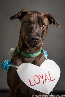 Mixed Breed (Large) Mix Dog for adoption in Bradenton, Florida - Maximillion