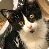 Adopt A Pet :: Athena - Bensalem, PA