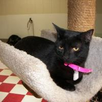 Adopt A Pet :: CC - Thomasville, GA