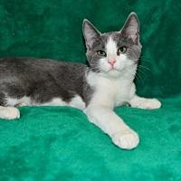 Adopt A Pet :: Fleur - Buford, GA