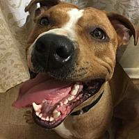Adopt A Pet :: Moe - Coming Soon - Nashville, TN