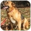 Photo 2 - German Shepherd Dog Dog for adoption in Nesbit, Mississippi - Sheena