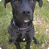 Adopt A Pet :: Captain - Reisterstown, MD