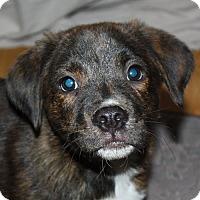 Adopt A Pet :: Festus - kennebunkport, ME