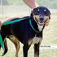 Adopt A Pet :: Rico - Kingsport, TN