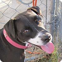 Adopt A Pet :: Mina (SWEET!!) - Copperas Cove, TX