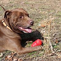 Adopt A Pet :: Harry - Greensboro, NC