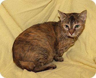 Domestic Shorthair Cat for adoption in Marietta, Ohio - Peggy Sue (Spayed)