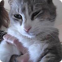 Adopt A Pet :: Wingnut - Glendale, AZ