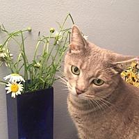 Adopt A Pet :: Hannah - Cleveland, OH