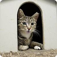 Adopt A Pet :: Lucille - Elyria, OH