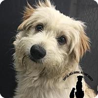 Adopt A Pet :: Kody - Baton Rouge, LA